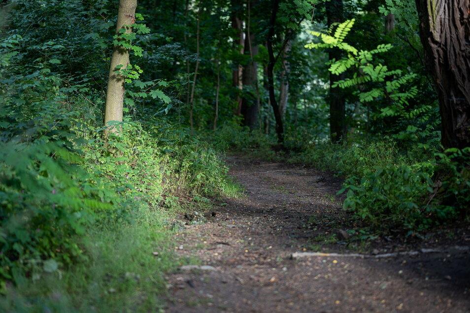 Die Wege im Weinberggelände sind teilweise recht holprig, kleine Bäumchen ragen in den Weg hinein.