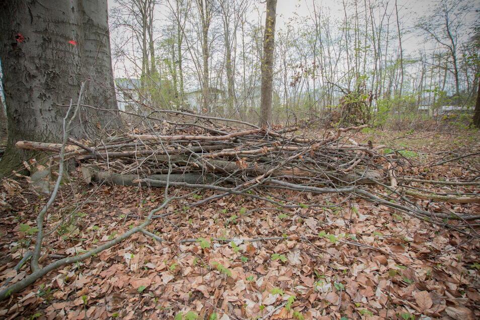Der Wald war einst beliebter Jugendtreff. Er hat schon bessere Zeiten gesehen.