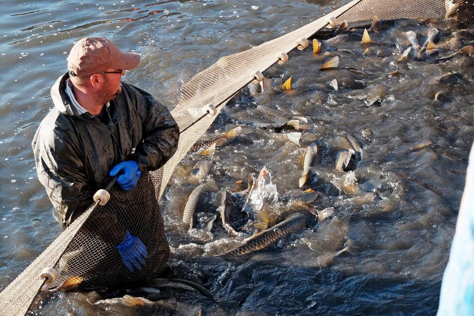 Die Koselitzer Fischer hoffen wieder auf einen großen Fang.