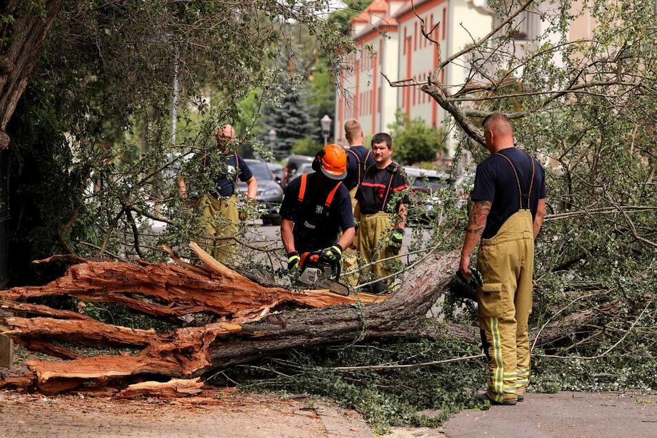 Der umgestürzte Baum musste von der Feuerwehr zersägt werden.