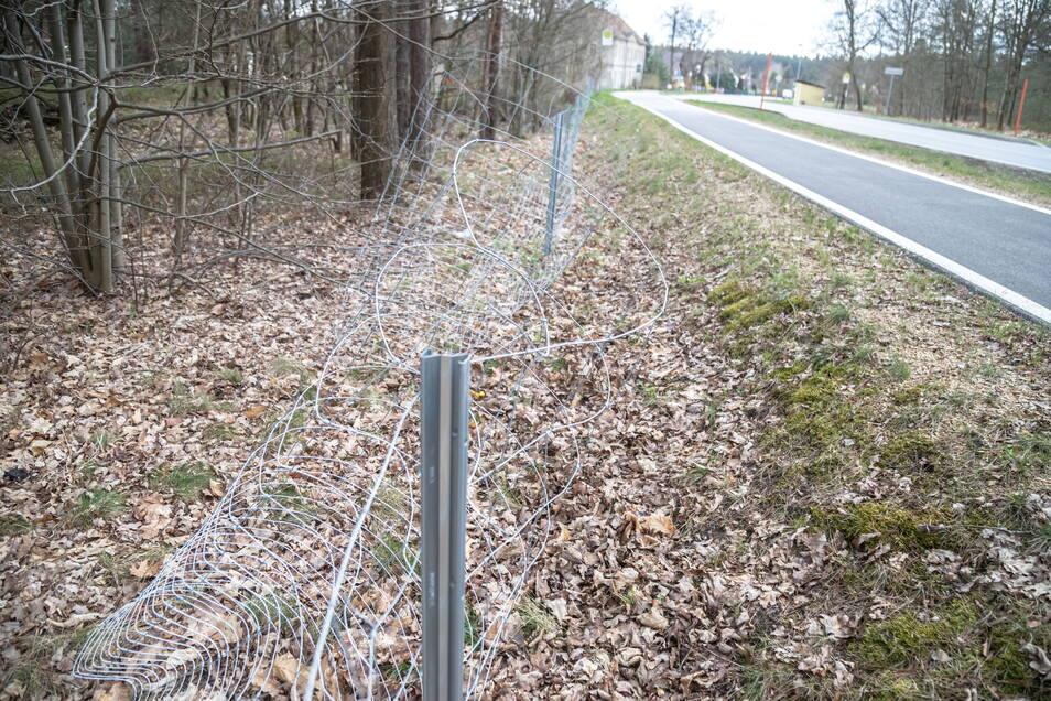 Der Wildschweinzaun entlang der B 115 zwischen Sandschenke und Stannewisch wird in regelmäßigen Abständen mutwillig aufgebogen.