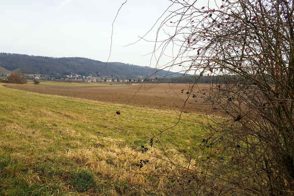 Auf diesen landwirtschaftlich genutzten Flächen sollen künftig bis in 15 Meter Tiefe Kiese und Sande abgebaut werden.