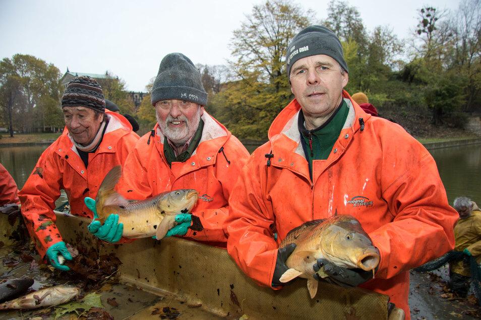 Im November 2019 hatten Mitarbeiter des AVD-Angelservice die Silvesterkarpfen aus dem Zwingerteich geholt. Kürzlich haben sie dort wieder neue Fische ausgesetzt.