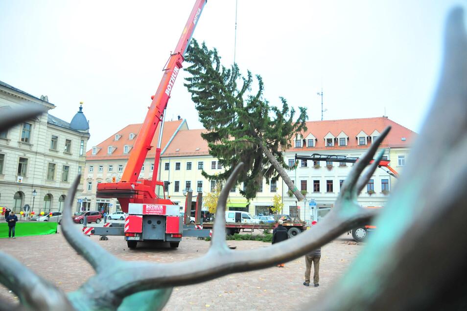 """Stets ein Kraftakt"""": Das Aufstellen des Mittelbaumes auf dem Großenhainer Weihnachtsmarkt. Jetzt geht es auf die Suche nach dem 2020er Baum."""