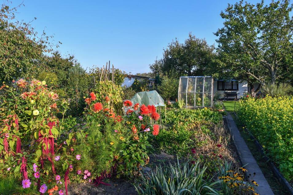 Welche Zukunft haben die Kleingärten in Meißen? Darum geht es am Runden Tisch zur Kleingartenentwicklung.