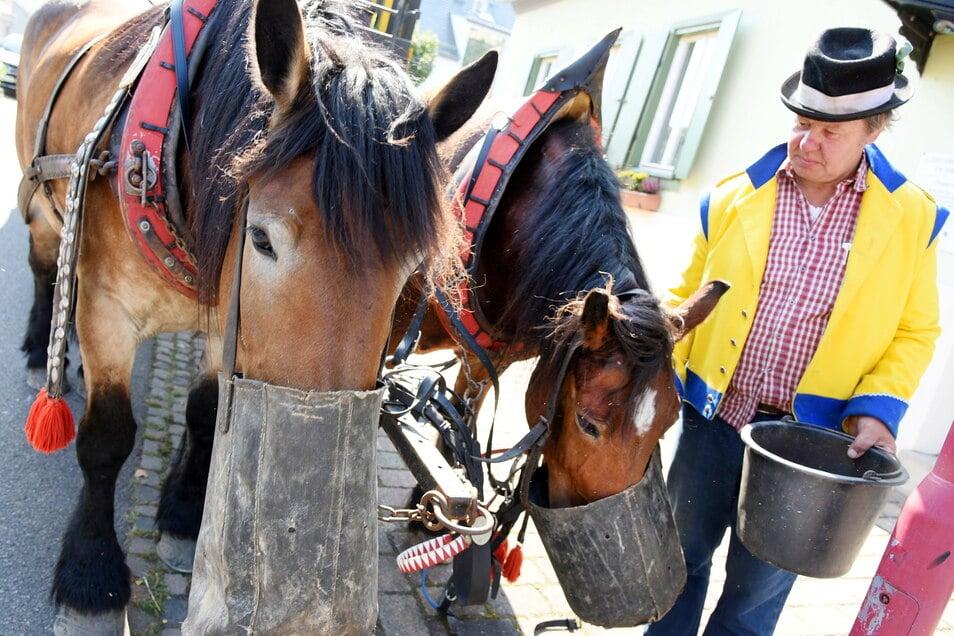 """Mittagspause für die Pferde """"Evi"""" und """"Frau Krause"""" /dpa-Zentralbild/dpa +++ dpa-Bildfunk +++ Foto: dpa-Zentralbild"""