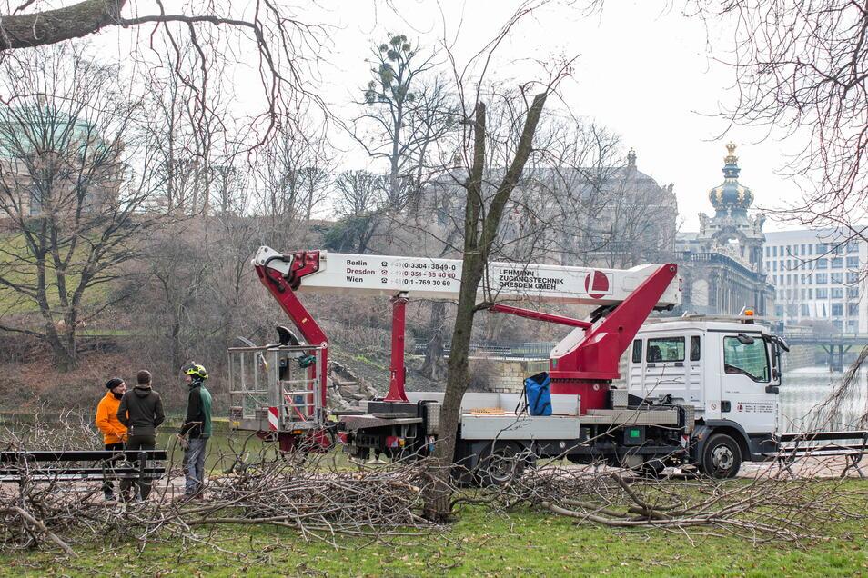 Die Bäume am Zwingerteich werden derzeit ausgeästet. Bis Mitte kommender Woche sollen alle Arbeiten abgeschlossen werden.