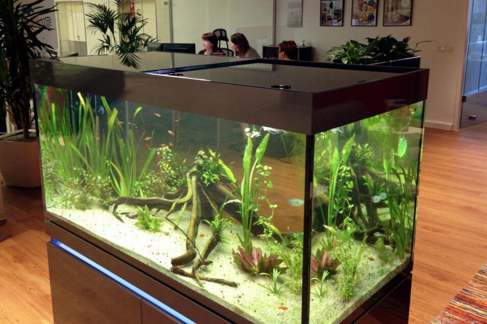 Zweifellos die Attraktion der Wohn-Lounge der LebensRäume e. G. Hoyerswerda im Lausitz-Center: das 700-Liter-Aquarium an der Sitzecke, neben dem man bei den Beraterinnen des Großvermieters seine Anliegen geklärt bekommen kann.