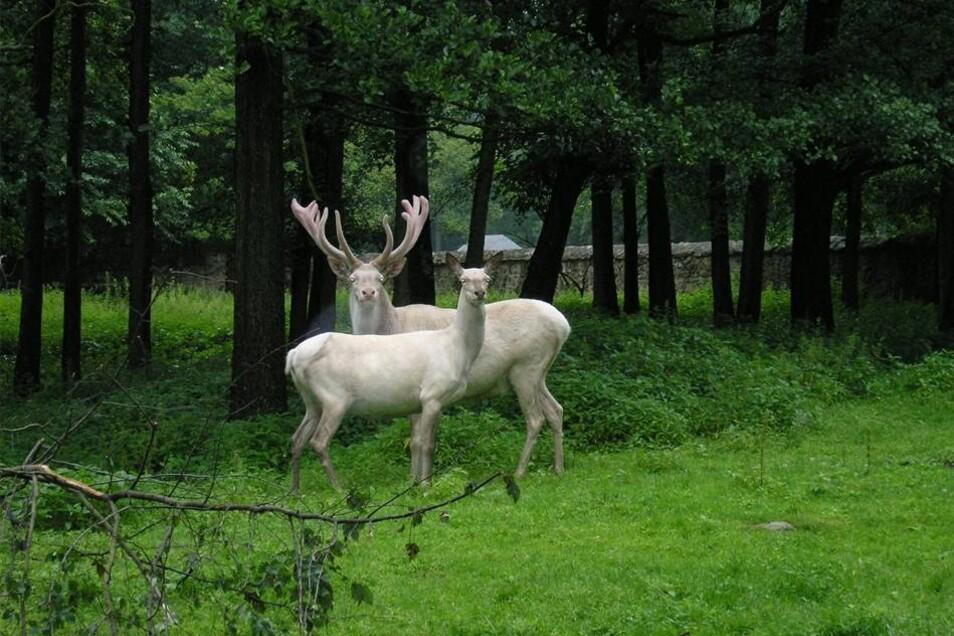 Die Betreiber des Geheges hoffen, dass das weibliche Alttier in diesem Jahr Nachwuchs erwartet. Dann würde sich der Bestand um den getöteten Hirsch wieder erholen.