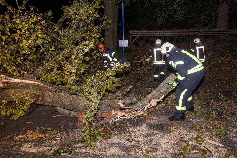 Eine Sturm knickte am Wochenende Bäume im Landkreis Bautzen. In Bischofswerda-Schönbrunn versperrte in der Nacht zum Sonntag ein riesiger Ast die Burkauer Straße. Die Feuerwehrleute mussten auch zur Säge greifen um, die Straße wieder freizulegen
