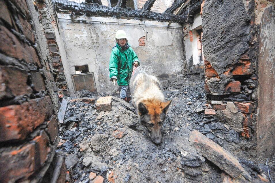 Mit einem Spürhund sucht eine Polizistin im Februar 2009 nach dem Opfer in dem abgebrannten Haus in Walda.