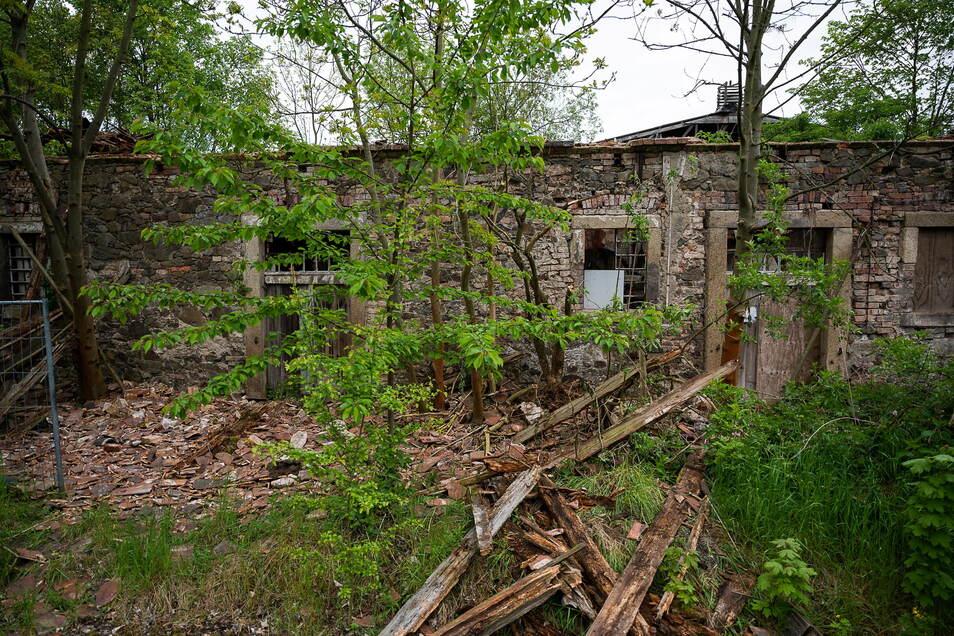 Von außen sieht der Kuhstall aus wie eine Ruine. Doch drinnen sind viele Gewölbe erhalten.