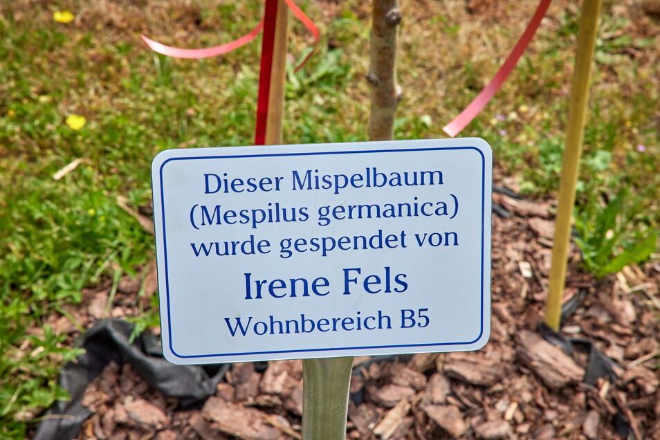 Nun weiß jeder, wer diesen Baum im Therapiegarten in Pirna gespendet hat.