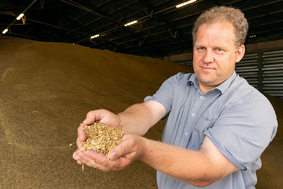 Der Vorsitzende des Regionalbauernverbandes Bautzen-Kamenz, Stefan Triebs, zeigt frisch geerntetes Getreide. Rund 10.000 Tonnen lagern in großen Hallen bei Radibor.