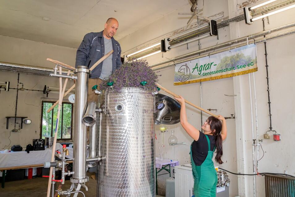 Kai Svensson aus Schleswig-Holstein hat seine mobile Destillieranlage mit nach See gebracht. Mehrere Tage wird es insgesamt dauern, bis alle geernteten Lavendelblüten von drei verschiedenen Sorten ihr Öl abgegeben haben.