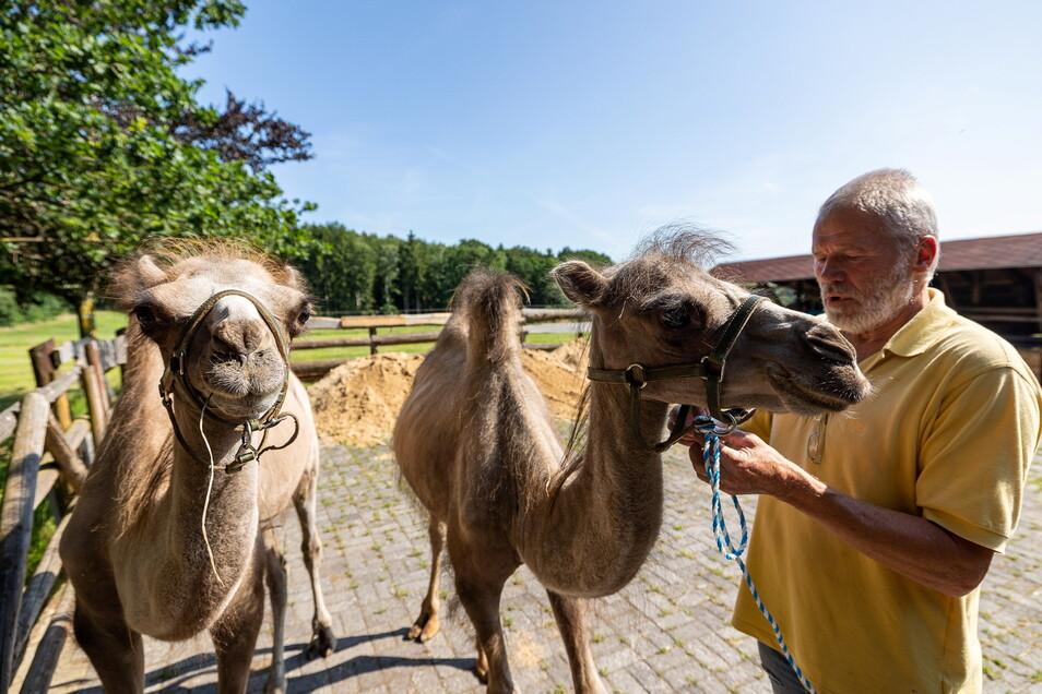 Lena und Lana heißen die beiden Kamele, die der Tiergartenchef Hubert Sperlich am Dienstag in Höckendorf in Empfang genommen hat.