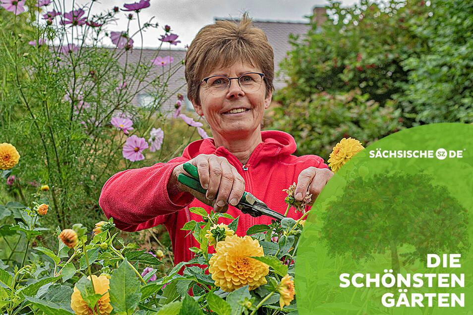 Jutta Fessel aus Zschornau bei Kamenz liebt ihren Garten hinterm Haus über alles. Zurzeit blühen die Dahlien in allen möglichen Farben.