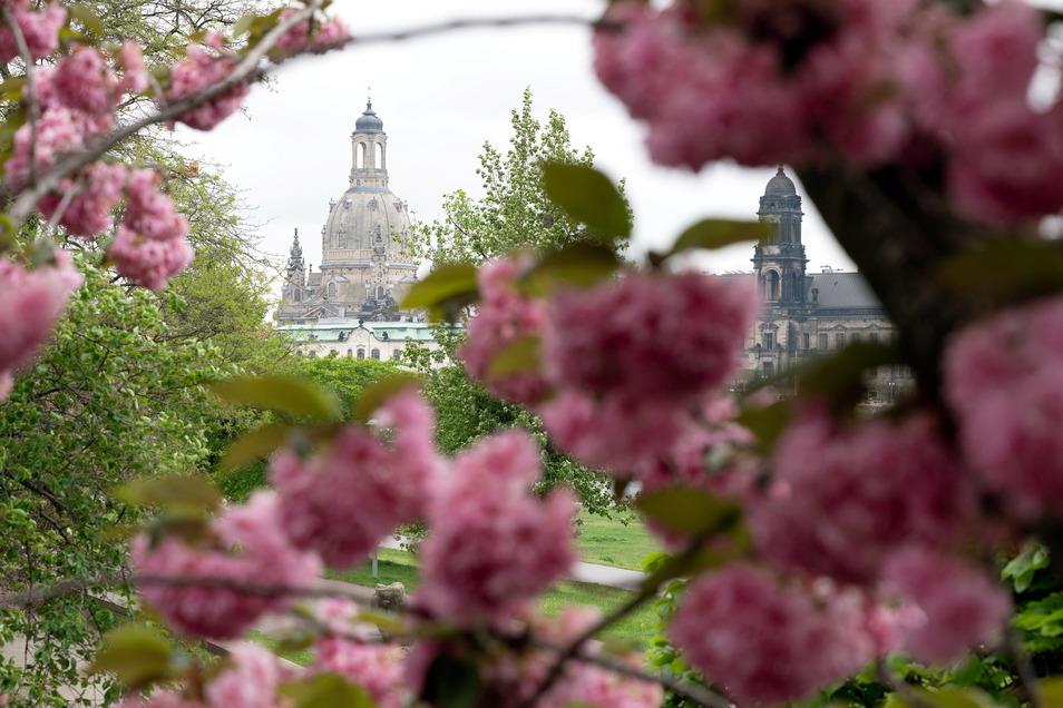 In Dresden kann man ab Mittwoch wieder seinen Kaffee in der Außengastronomie genießen - unter Auflagen und wenn das Wetter mitspielt.