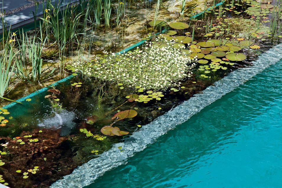 Dieser Schwimmteich hat drei Bereiche: eine Sumpfzone, eine Zone mit Unterwasserpflanzen und eine ohne Pflanzen zum Baden.