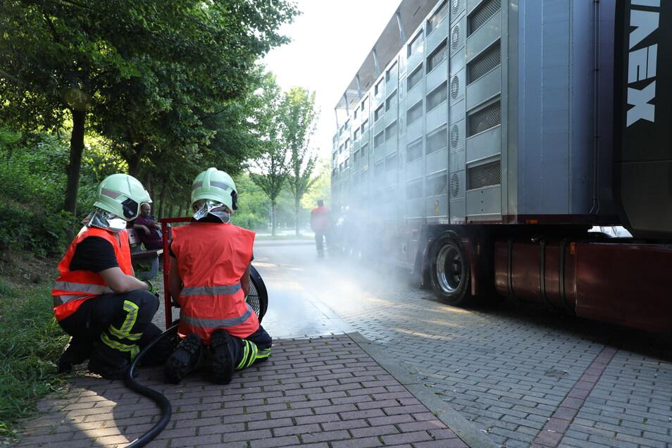 Mit Wasser und einem Lüfter sorgte die Feuerwehr für sinkende Temperaturen auf dem Tiertransporter.