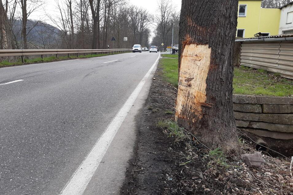Gegen diesen Baum ist der Mann mit seinem VW geprallt.