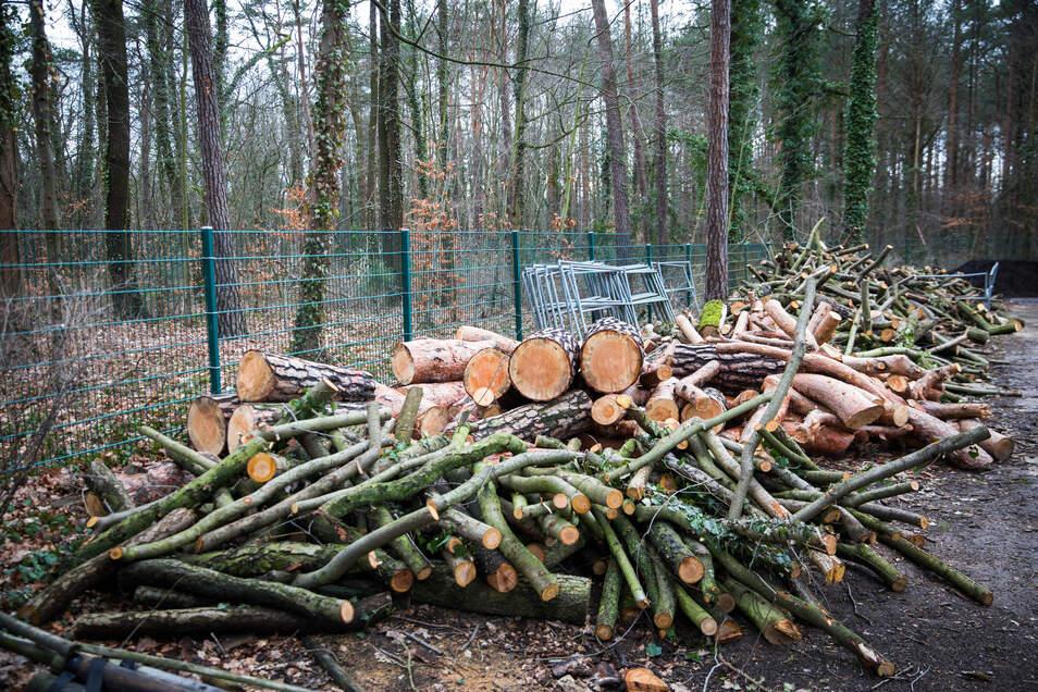 Hunderte Bäume wurden im Waldpark Blasewitz gefällt. Foto: Sven Ellger