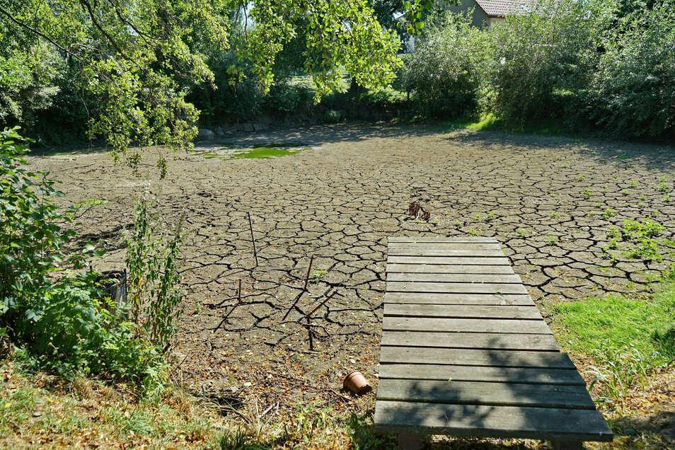 Kein Wasser mehr im Teich von Striegnitz.. Die Fische wurden rechtzeitig nach Roitzsch umgesetzt.