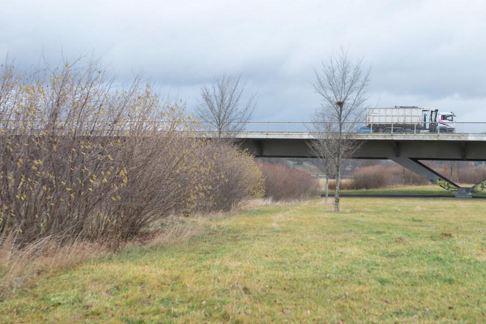Diese Strauchreihen sollen Kleine Hufeisennasen und andere Fledermausarten unter der Waldschlößchenbrücke hindurchleiten.