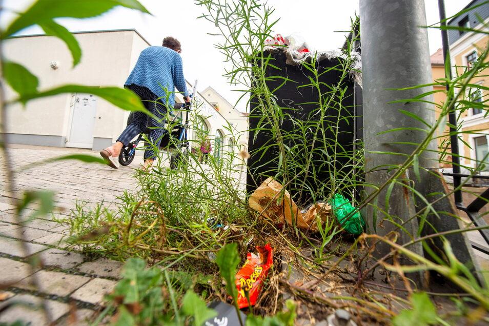 Kein schöner Anblick ist das große Unkraut auf der Bahnhofstraße, kurz vor Beginn der Bahnunterführung. Zwischen den Pflanzen sammelt sich bereits Müll an.