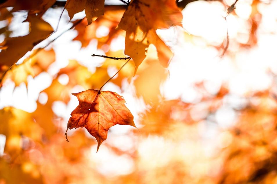 Der Herbst hält neben gemütlichen Stunden Zuhause auch draußen einige Abenteuer bereit.