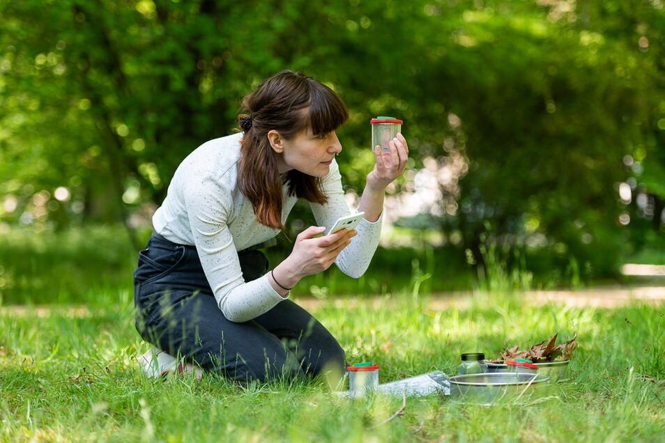 Anika Neu vom Senckenberg-Museum probiert die neue App zum Bestimmen von Bodentieren im Stadtpark Görlitz.