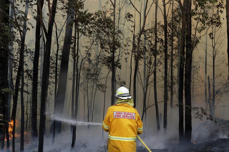 Ein Feuerwehrmann kontrolliert ein Gegenfeuer, um einen größeren Brand in der Nähe einzudämmen. Rund 2.300 Feuerwehrleute sind allein im Bundesstaat New South Wales im Einsatz gegen etwa 110 Buschbrände.