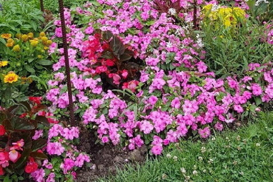 Ein Blumenliebhaber, der gezielt Hand anlegt? Wo sonst die Rosen standen, klafft jedenfalls seit dem Wochenende nur ein großes Loch.