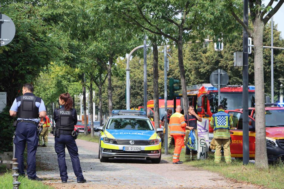 Acht Menschen wurden im Großen Garten von Hornissen gestochen.