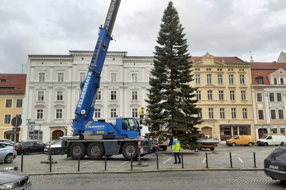 Da steht die Douglasie auf dem Obermarkt, wo erstmals nach Jahren wieder ein Weihnachtsbaum steht.