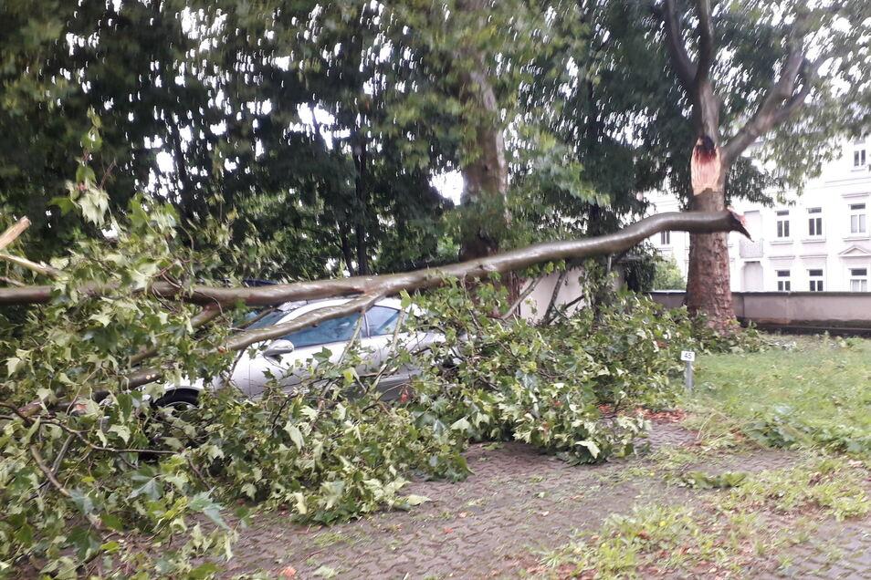 Im Hinterhof des Ärztehauses am Puschkinplatz in Riesa brach dieser Ast nach einem Starkregen am Donnerstag ab und beschädigte einen Mercedes-Benz.