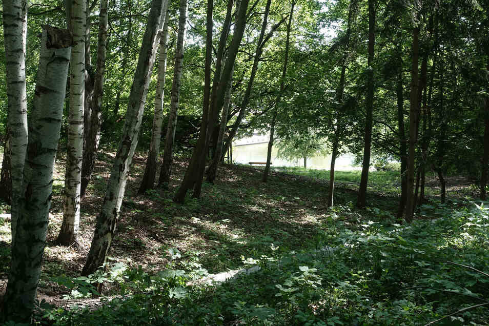 Bei der Neugestaltung des Bürgergartens ist bisher auch das Fällen oder die Umsetzung von Bäumen vorgesehen, damit wieder Sichtachsen entstehen.