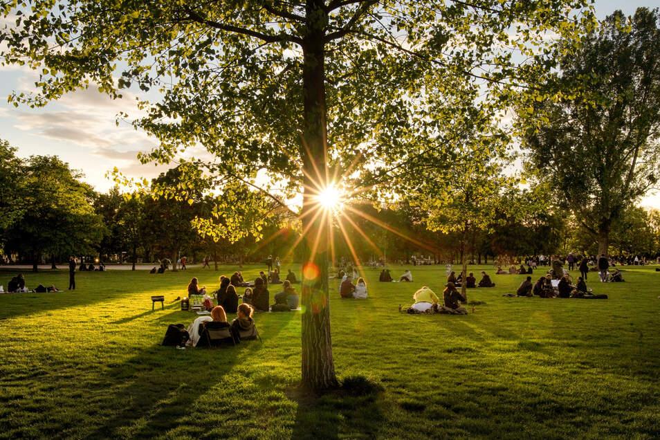 Im Alaunpark genießen viele junge Leute den Sonnenuntergang. Wer nicht ins Restaurant will, findet hier ein lauschiges Plätzchen, um sich mit Freunden zu treffen.