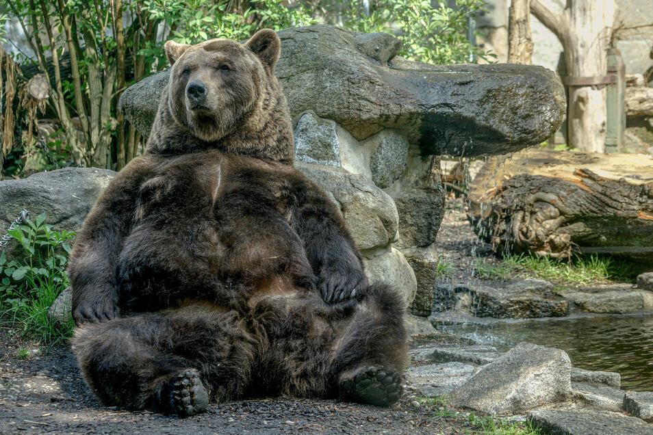Bekannt ist der Tierpark vor allem für seine Bären. Seit 2010 ist der Bär auch das Leittier des Zoos.