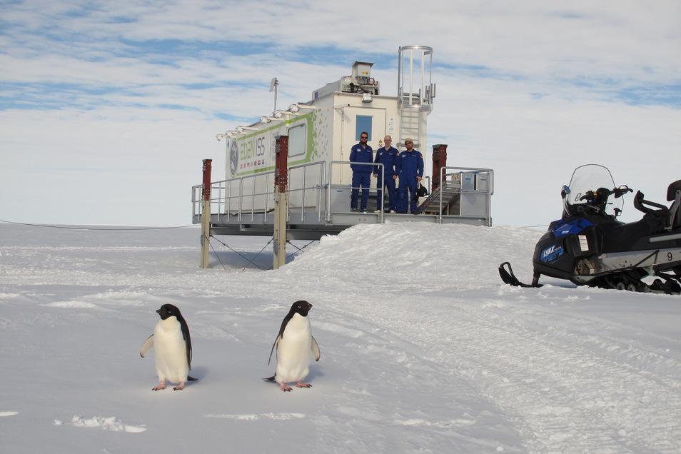 In der Antarktis wird das Züchten von Pflanzen bereits erfolgreich getestet.