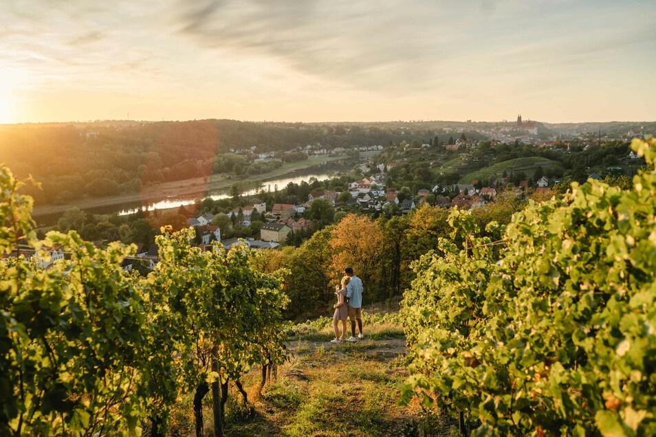 Ein Paar genießt den Sonnenuntergang in den Weinbergen des Weingutes Schuh.