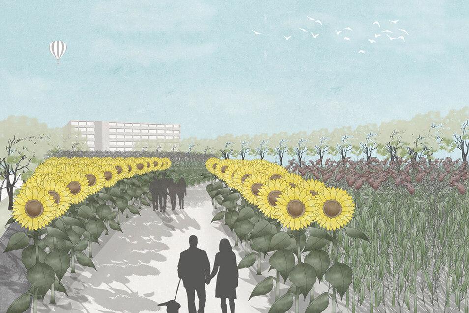 """So stellen sich Judith Charlott Loewe und Rebecca Krause ihre """"Produktive Stadtlandschaft"""" mit Energiepflanzen-Anbau vor."""