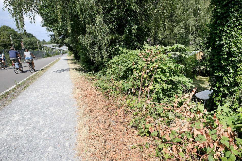 In der Nähe dieses Gebüsches, das am Radschnellweg liegt, soll die junge Frau von einer Gruppe Jugendlicher überfallen und sexuell missbraucht worden sein.