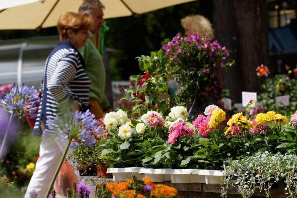 Schloss Krobnitz ist Schauplatz einer Gartenmesse mit besonderer Atmosphäre.