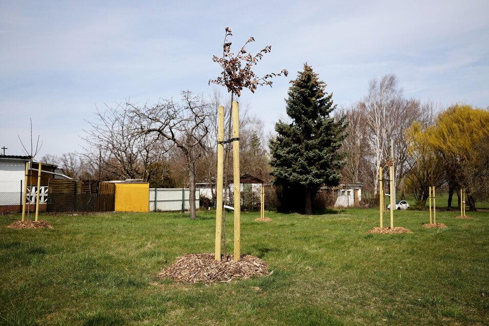 Am Reiter wurden gerade erst einige Bäume neu gepflanzt. Jetzt hat ein Ausschuss Spenden für mehrere Bäume angenommen.