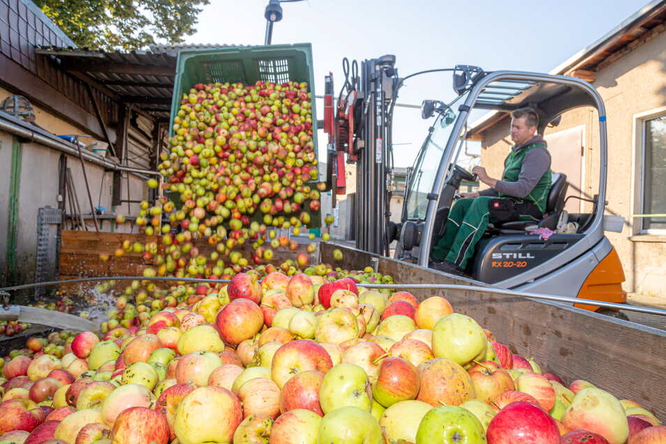 Sieht viel aus, ist aber vergleichsweise wenig: In der Kelterei Neubert fehlen viele Tonnen Äpfel. Vor allem die Lohnmosterei durchlebt eine schwere Zeit.