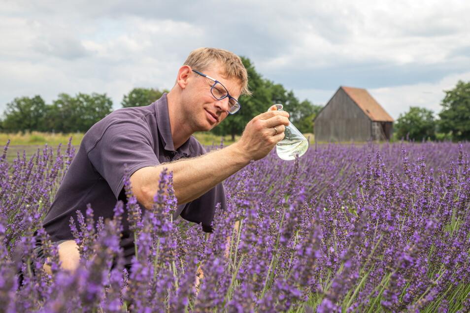 Andreas Graf, Chef der Agrargenossenschaft See, ist froh: Das Konzept, den Lavendel-Anbau mit folgender Ölgewinnung als zusätzliches Standbein zu etablieren, scheint aufzugehen.