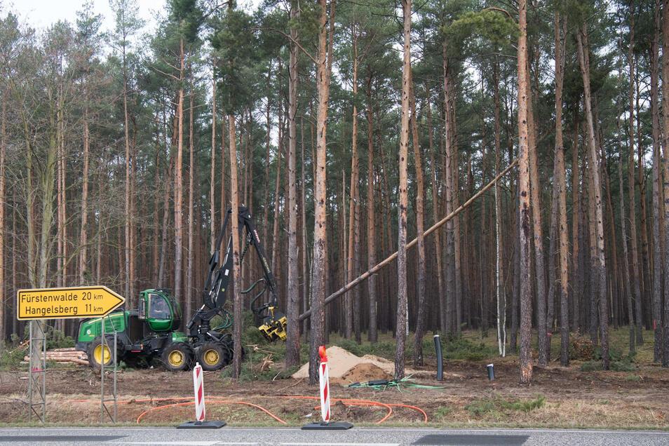 Mit einem Holzvollernter werden Bäume gefällt.