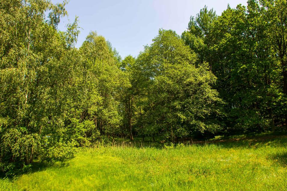 """In diesem Waldstück an der Straße """"Am Anbau"""" in Neustadt in Sachsen plant die Stadtverwaltung die Errichtung eines neuen Bestattungswaldes."""