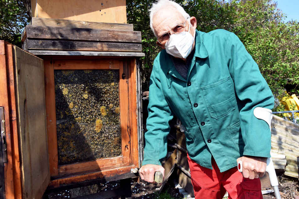 Der Hoyerswerdaer Imker Ulrich Schmidt an seiner Schaubeute. Durch die Glasscheibe an der Vorderseite kann man das sonst durch eine Holzwand den Blicken entzogene Treiben im Innern eines Bienenstocks beobachten. Die Tierchen scheint's nicht zu stören.